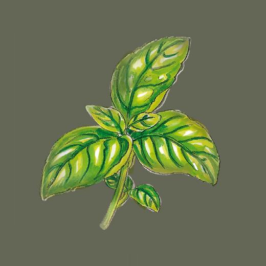 Kräuteröl Basilikum