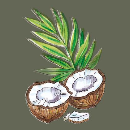 Kokosöl Illus